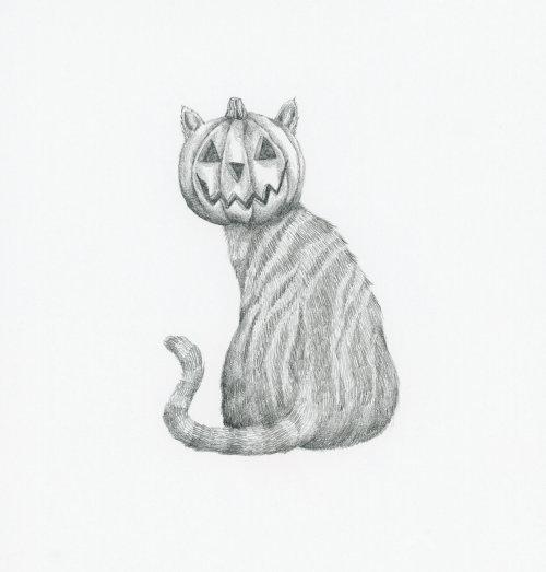 Gato com uma cabeça de abóbora