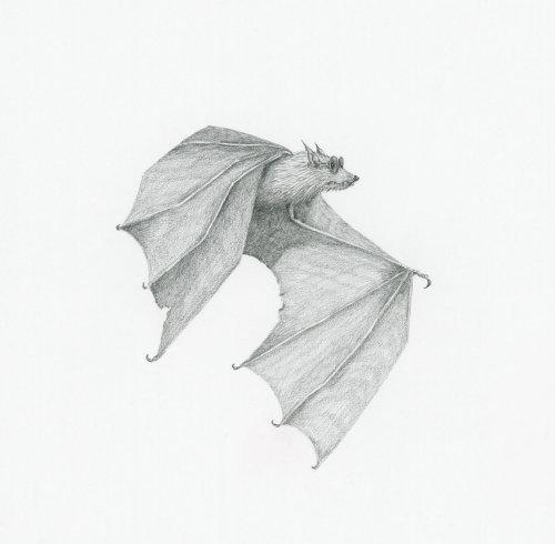 Bat wearing sunglasses artwork by Marieke Nelissen