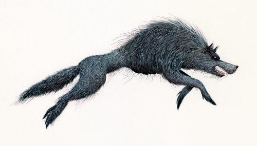 Fantasy wolf portrait art