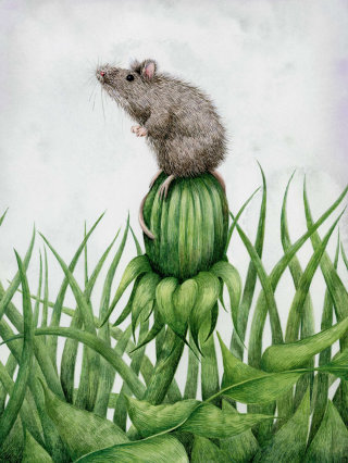 Mouse on the button of a dandelion.