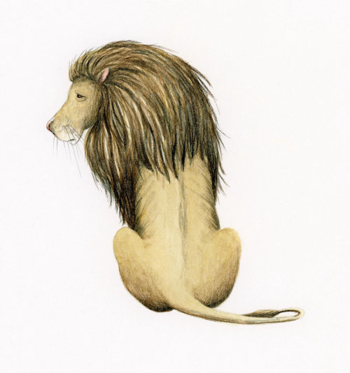 O leão do mágico de oz