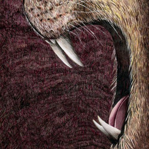 Lion roaring gouache illustration by Marieke Nelissen