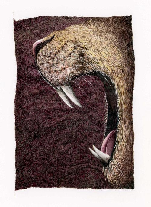 Ilustração de guache rugindo de leão por Marieke Nelissen