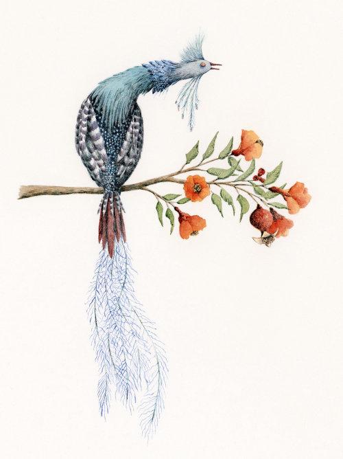 Pássaro em um galho de uma árvore de romã