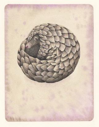 Editorial illustration of Pangolin by Marieke Nelissen