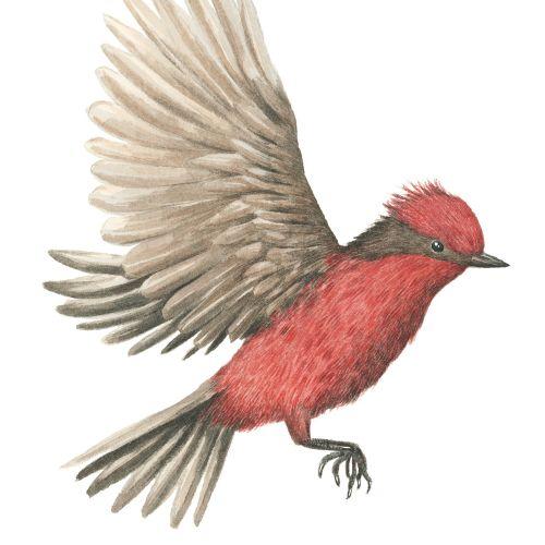 Marieke Nelissen Nature Illustrator from Netherlands