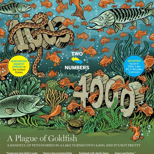 Editorial illustration of plague of Goldfish