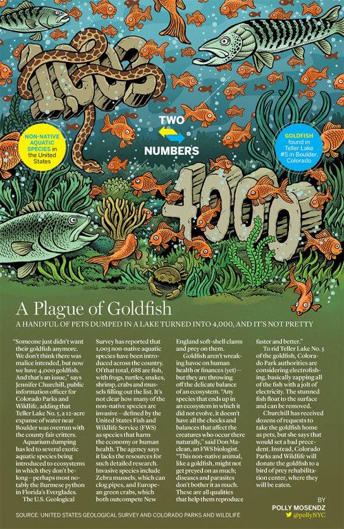Ilustração editorial da praga do peixe dourado