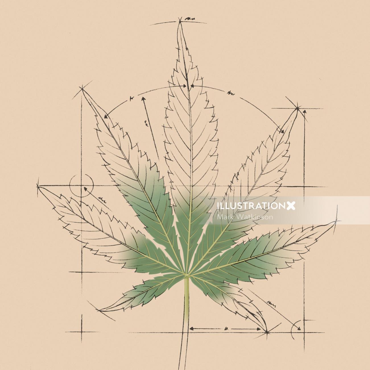 Medical plant illustration by Mark Watkinson