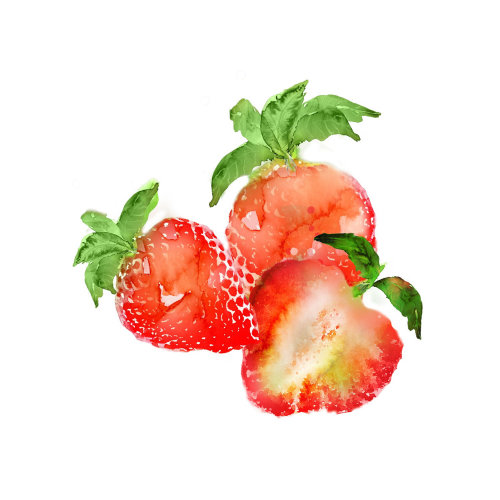 Strawberry watercolor painting by Marta Spendowska