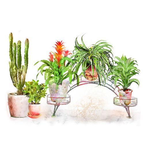 Houseplant watercolor illustration