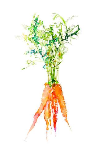 Illustration of Carrot