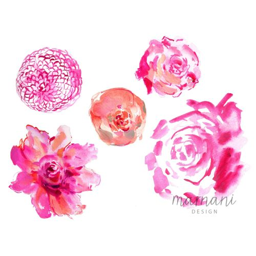 Magenta, Pink, Floral, Flowers, Peony, Roses, Spring, Soft, Feminine