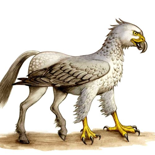 Animal illustration of Hippogriff