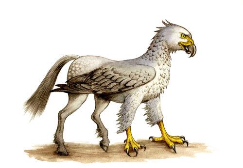 Animal illustration of Hippogriff