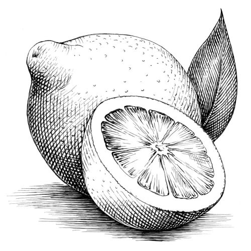 Line drawing of Lemons