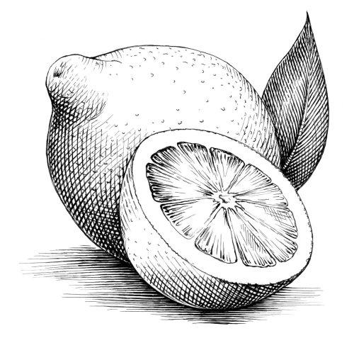 Line drawing of Lemons