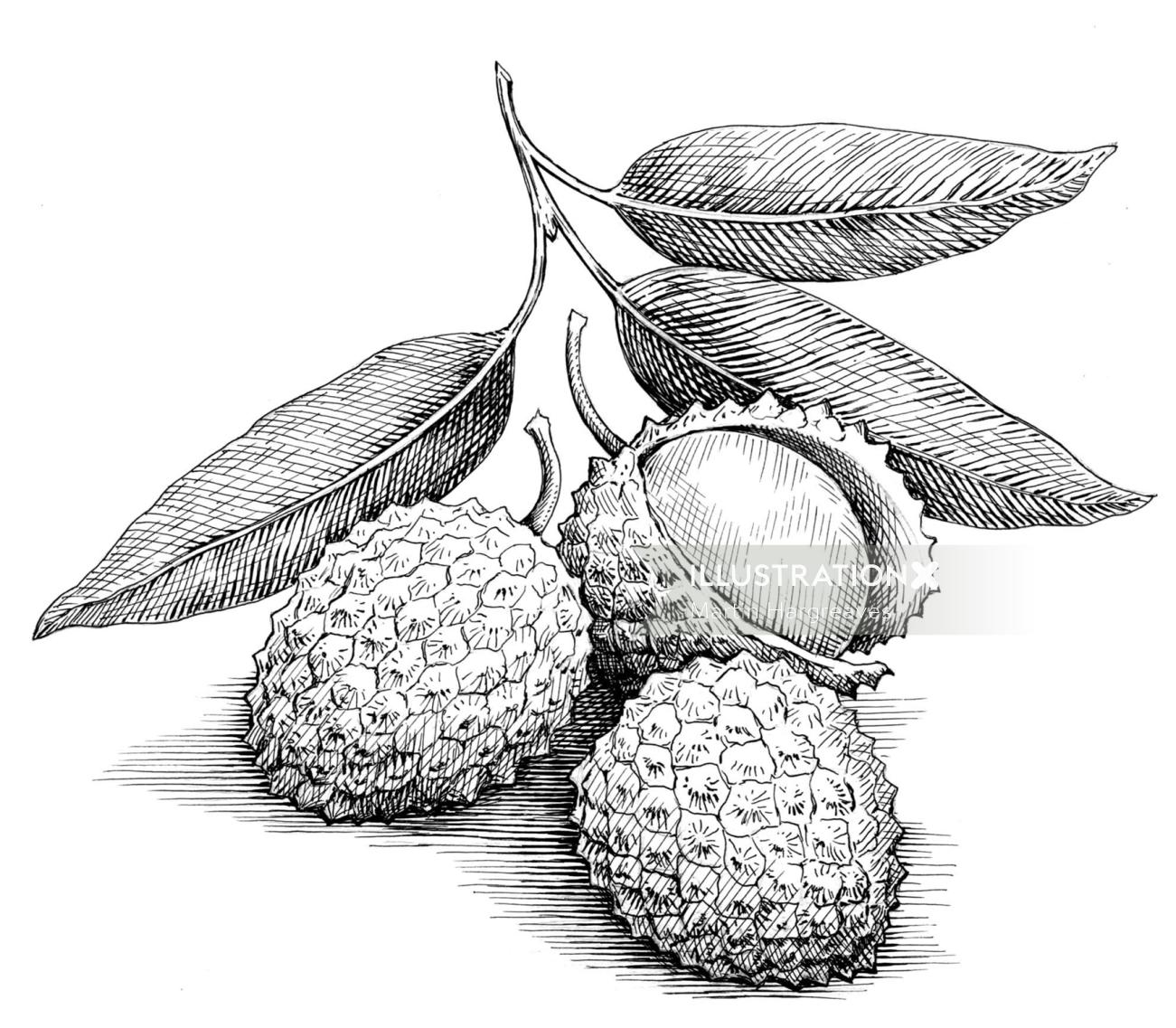 Black and white illustration of Lychees fruit