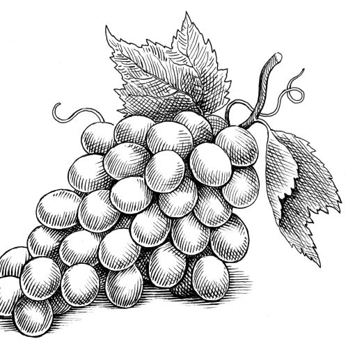 Black & White grapes