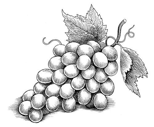 Raisins noirs et blancs