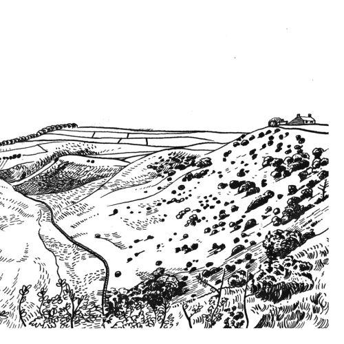 Matt Hollings In Black & White Black & White Illustrator