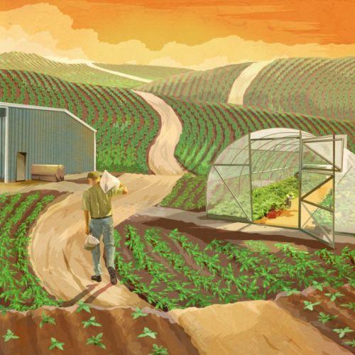 Vegetable farm digital painting