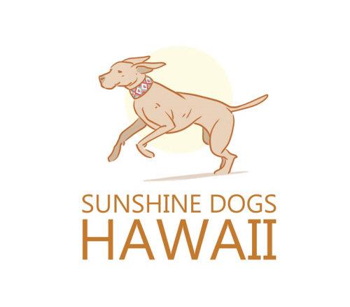 动物阳光狗夏威夷