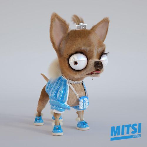Animals funny dog MITSI