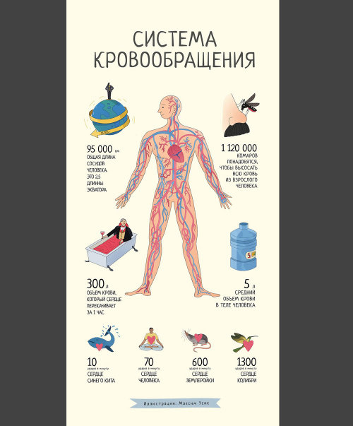 Cover poster of Blood system of human