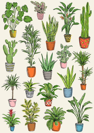 Illustration of plants in the pots