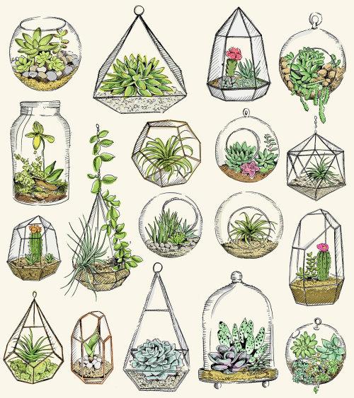 Ilustração de terraniums