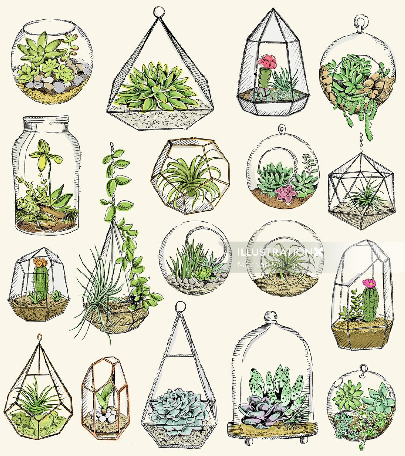 Illustration of terraniums
