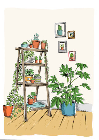 Illustration of plants on a ladder