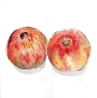 Pomegranate food illustration