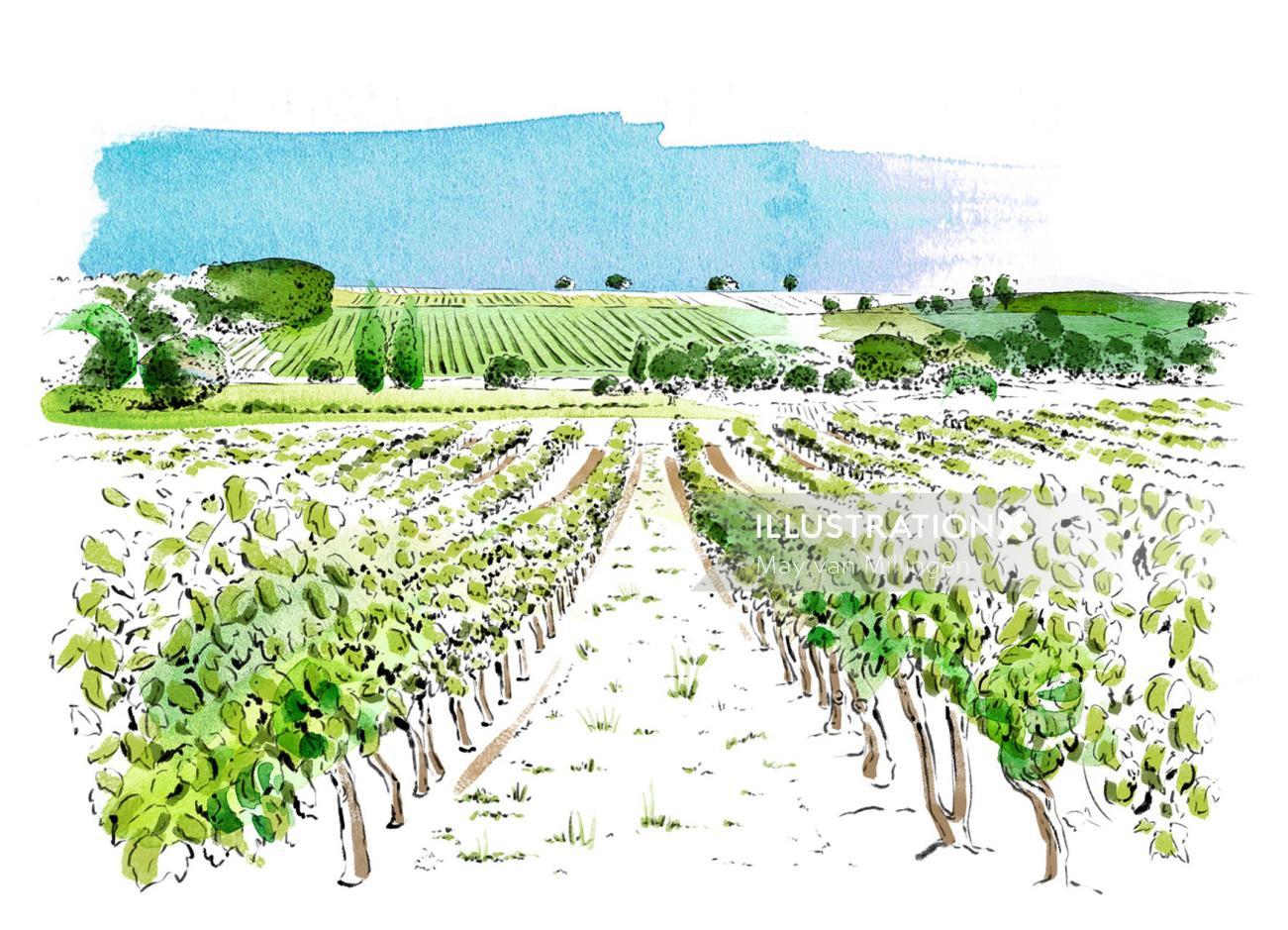 Food & Drink Vineyard
