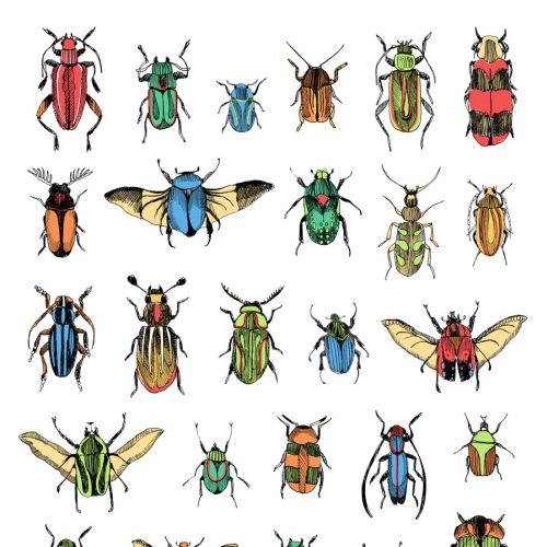 Insects illustration by May van Millingen