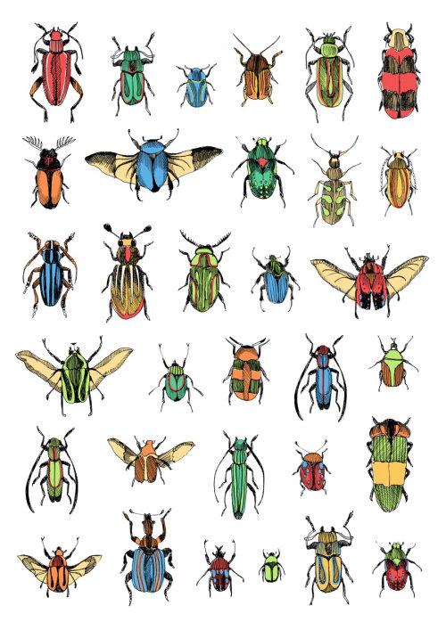 Ilustração de insetos de May van Millingen