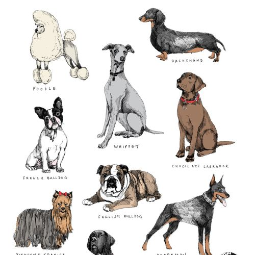 Dogs illustration by May van Millingen