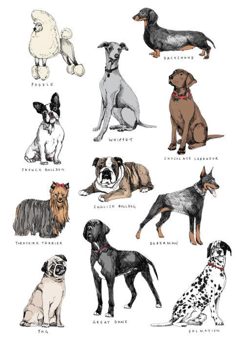 Ilustração de cães por May van Millingen