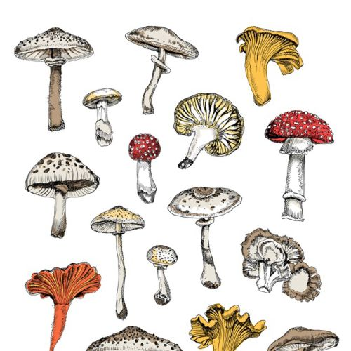 Types of mushrooms - Illustration by May van Millingen