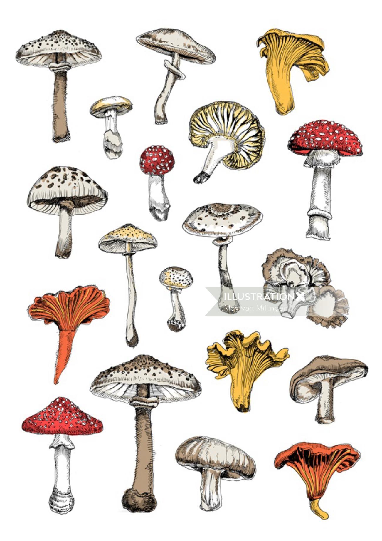 Types of mushrooms - Illustration by May van Millingen
