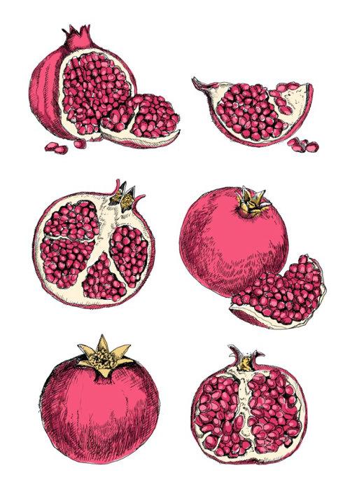 Pomegranate illustration by May van Millingen