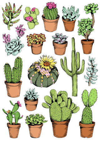 Cactus illustration by May van Millingen