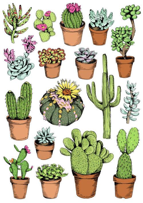 Ilustração de cacto por May van Millingen
