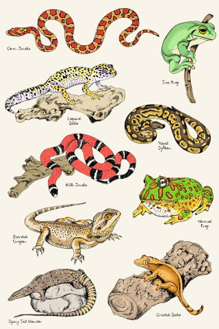 Reptiles illustration by May van Millingen