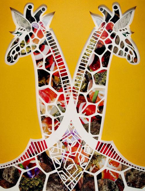 Girafa Coleção de ilustração animal