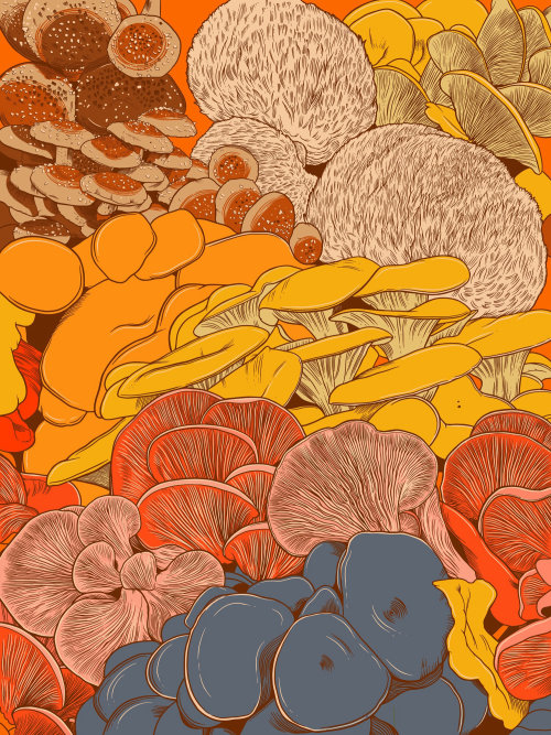 Beautiful gourmet mushrooms illustration