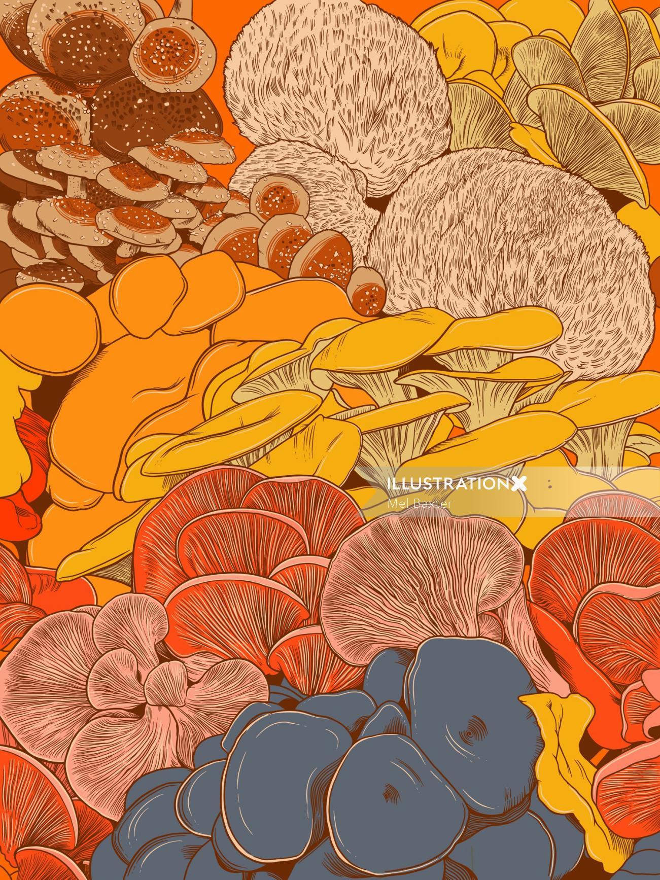 Beautiful gourmet mushrooms illustration