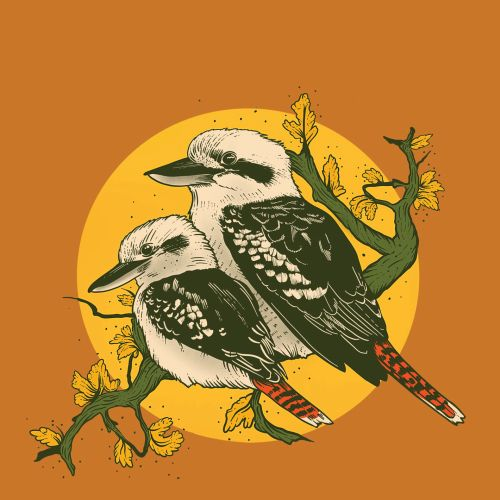 Graphic art of Kookaburra by Mel Baxter