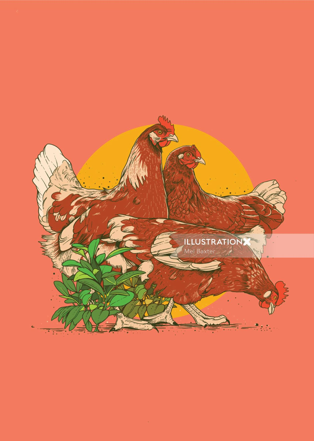 Graphic design of Hens by Mel Baxter